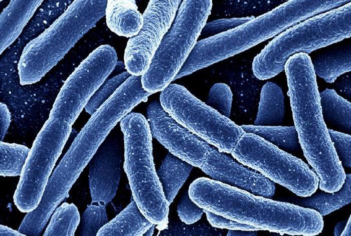 ბაქტერიული ეფექტურობის ტესტები