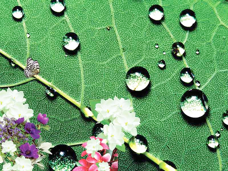 Ικανότητα απορρόφησης υγρών - Δοκιμή υδροφιλίας